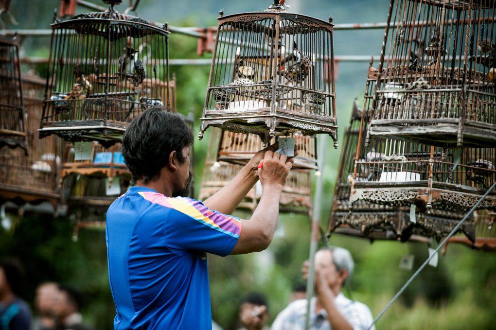 Tailandas: čiulbėjimo turnyras