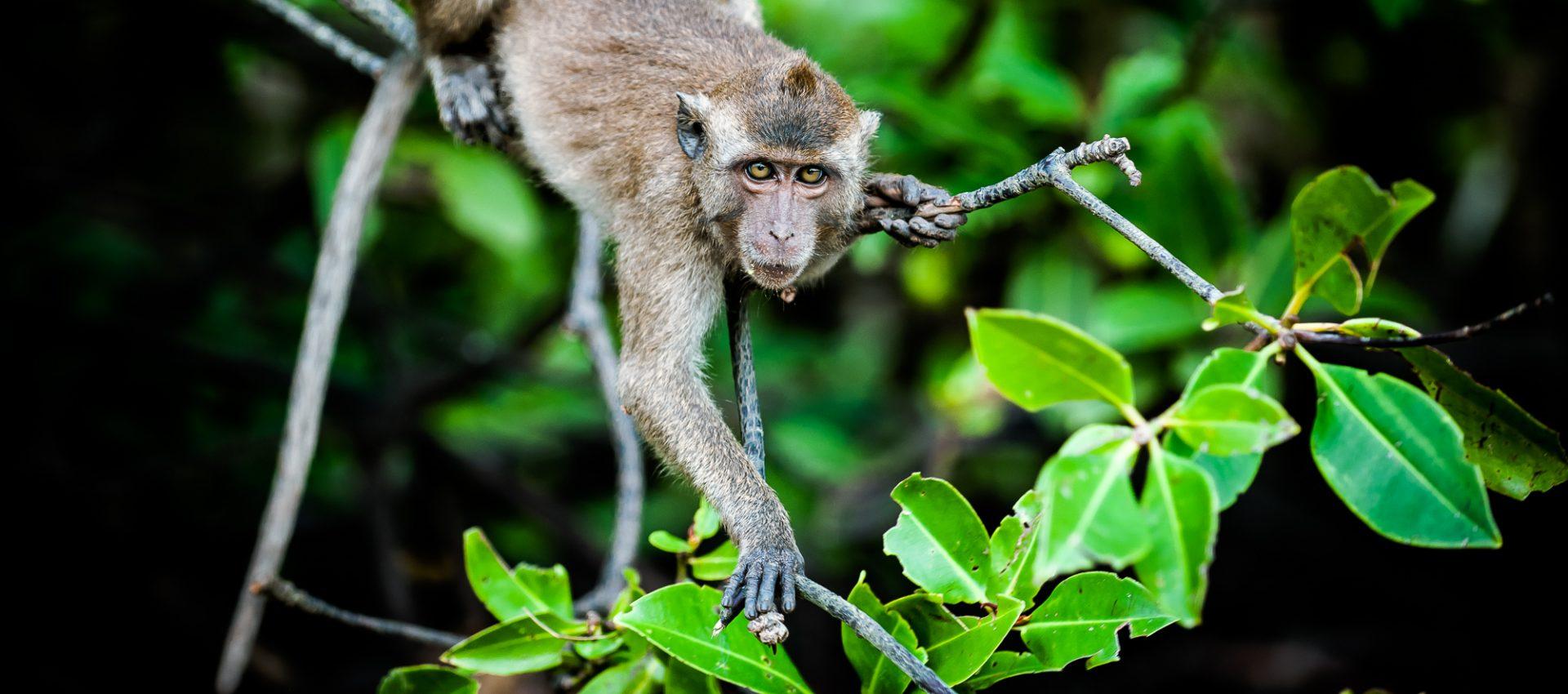 cropped-monkeys-1021.jpg